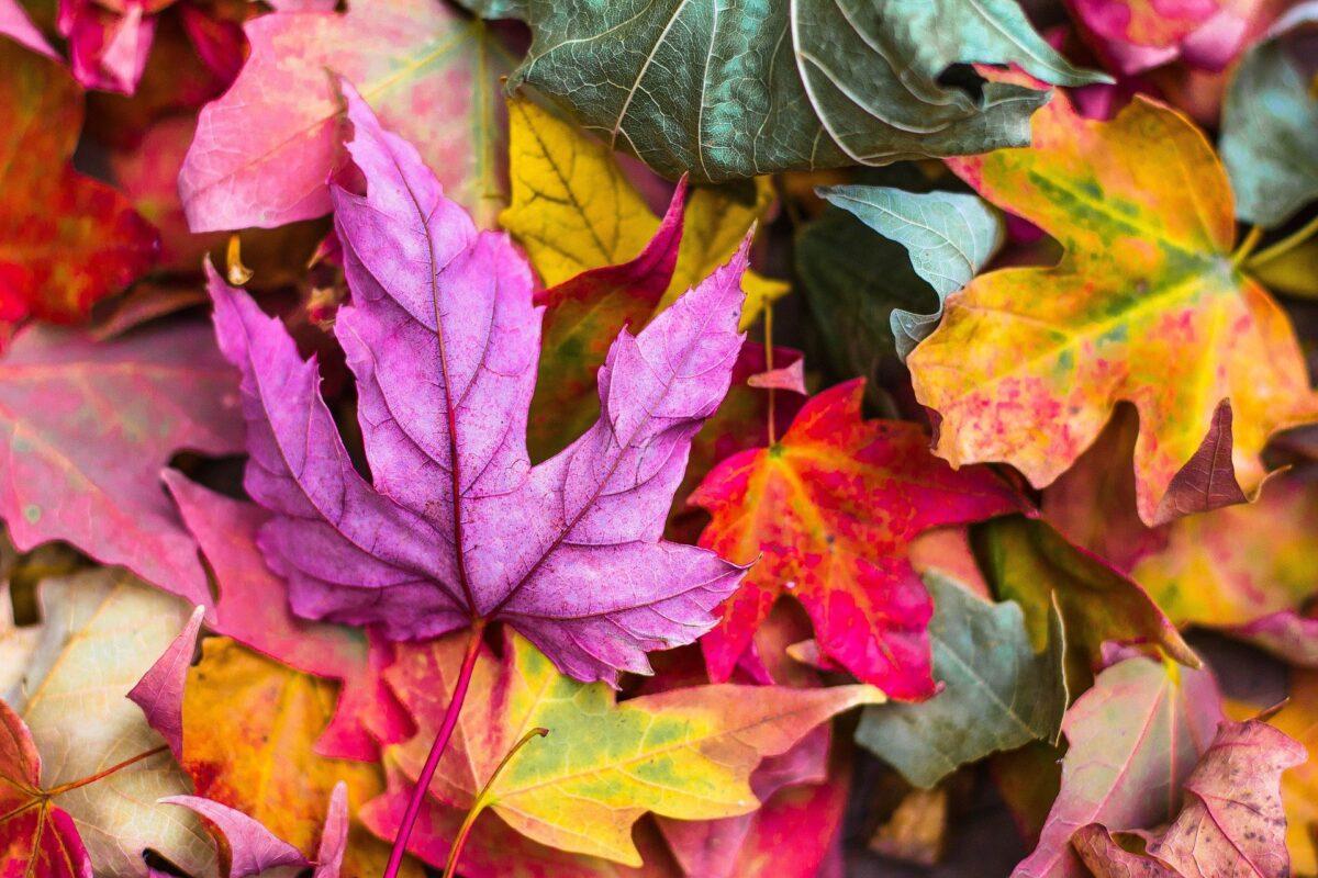 Vaisselle jetable pour l'automne 2021, quelles sont les couleurs à la mode cette saison